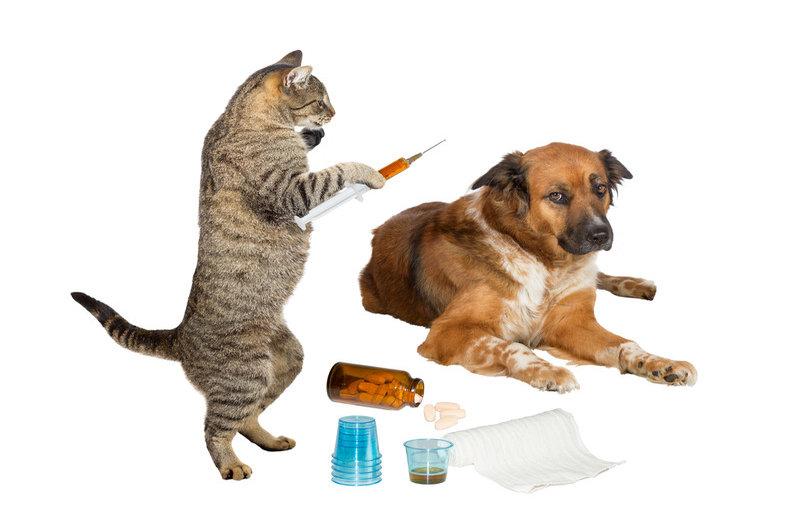 برنامه صحیح واکسیناسیون در سگ و گربه